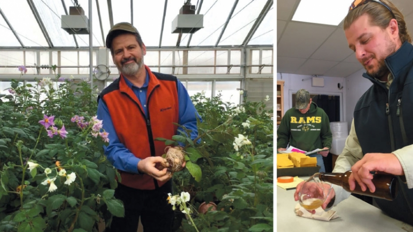 LEFT: Dr. John Bamberg, USDA geneticist and project leader of the genebank. RIGHT: Tim Kaczmierczak, greenhouse technician at the UW-Peninsular Research Station, pours some potato beer.