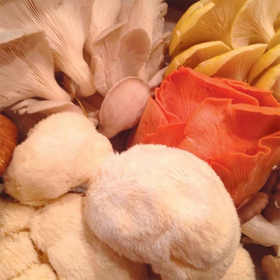 Variety of mushrooms.