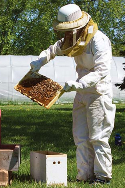 gardens have a ten-hive apiary