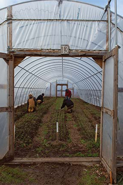 hoop houses provide a shielded greenhouse for plants