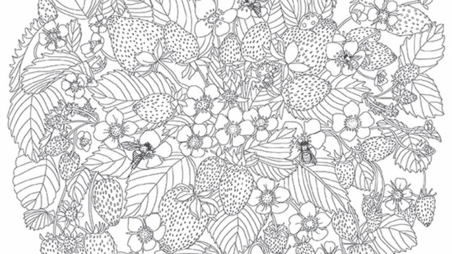 strawberry plant coloring image